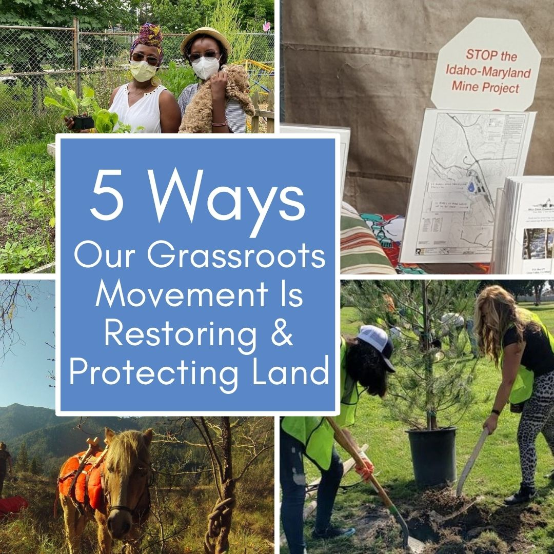 5 Ways Our Grassroots Movement is Restoring & Protecting Land